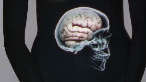Vidéo voici un article sur le ventre, notre deuxième cerveau.