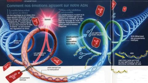 Nos humeurs modifient constamment notre ADN