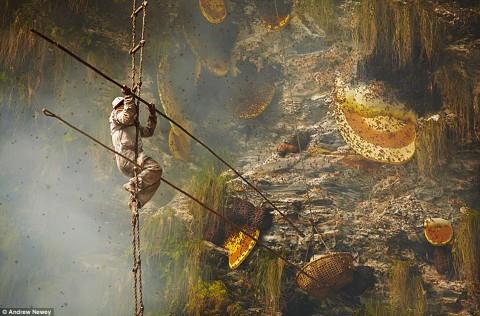 Rencontre avec les abeilles de l'Himalaya qui font du miel psychédélique
