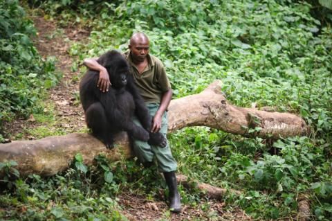 Cet homme a consolé un gorille qui venait tout juste de perdre sa mère