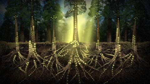 Les plantes communiquent entre elles via un réseau «internet» de champignons