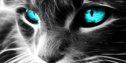 De nouvelles études prouvent que les chats sont des guérisseurs holistiques