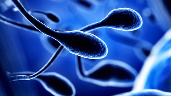 sur-le-sperme-2.jpg