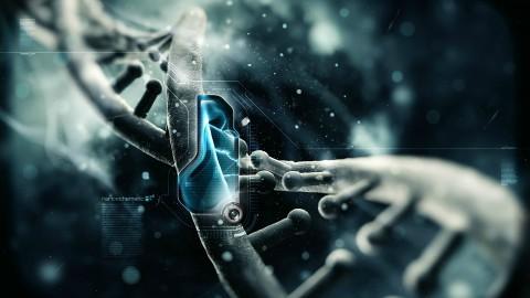 La transmission de la mémoire se ferait à travers les générations dans nos gènes