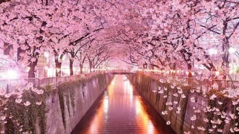 20 tunnels d'arbres magiques qui vous donneront envie d'aller faire une promenade à l'infini