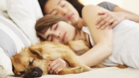 Partager son lit avec son animal de compagnie améliore le sommeil et soulage l'anxiété