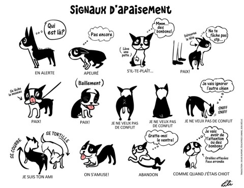 Comment comprendre ce que votre chien essaie de dire