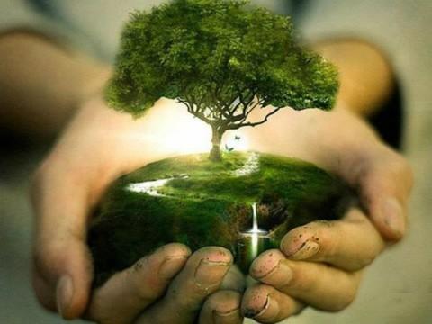 L'intelligence secrètes des plantes : Je pense donc je suis?