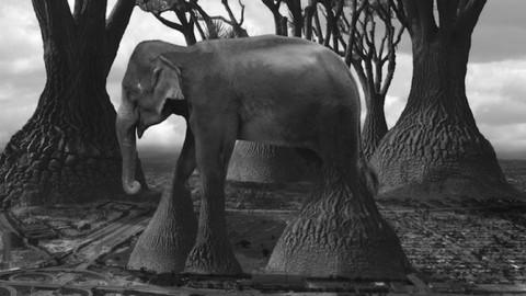 La photographie du film Hand-manipulée de Thomas Barbey