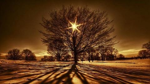Dessiner son arbre de vie symbolique pour se réaliser pleinement