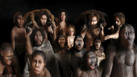 Je ne savais pas qu'il y avait autant d'espèces humaines éteintes.