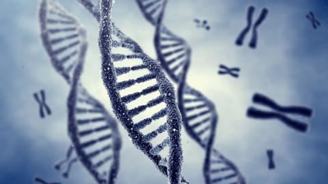 Notre ADN est modifié par nos états d'âme