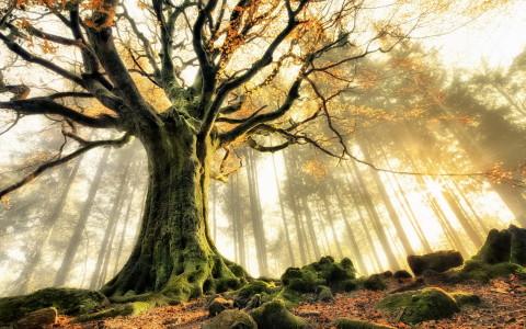 Découvrez votre arbre protecteur selon l'astrologie des druides Celtes