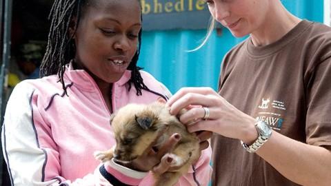 Voici pourquoi faire preuve de compassion envers les animaux peut améliorer votre santé