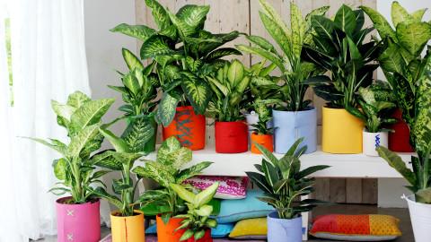 D'après ces recherches: vos plantes d'intérieur pensent, parlent et lisent vos pensées