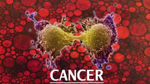 Cancer, espèces envahissantes, sélection naturelle et artificialité