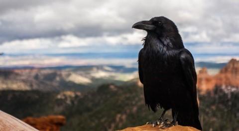 Voyez-vous des corbeaux partout où vous allez? Voici ce que cela révèle!