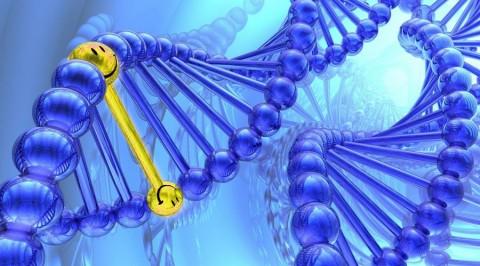 Il existerait bien une prédisposition génétique au bonheur