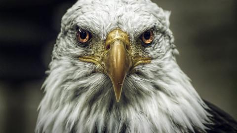 Les oiseaux sont nos messagers et ils méritent d'être observés