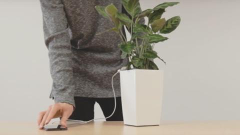 Génial : une plante verte pour recharger votre smartphone !