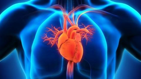 L'extraordinaire histoire du cœur (documentaire)