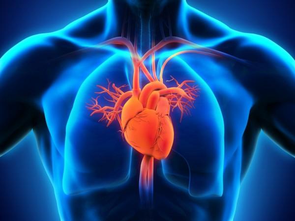 HumanHeartAnatomy-1024x768-e1466173560655.jpg