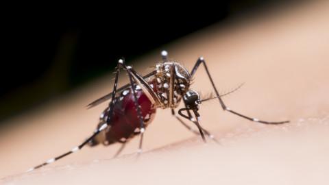 Moustiques: Voici pourquoi ils piquent certaines personnes et pas d'autres