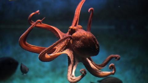 Avancée scientifique : l'adn de la pieuvre ne vient pas de ce monde