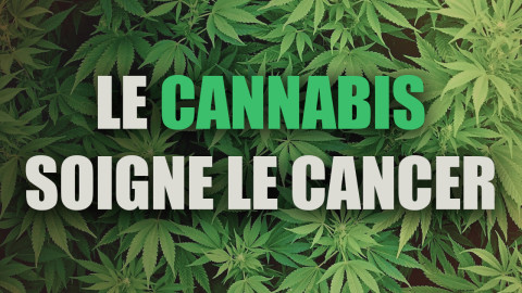 L'Institut National du Cancer vient de confirmer secrètement que le cannabis soignerait le cancer