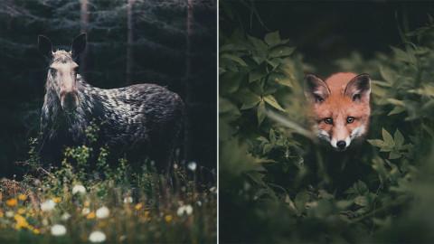 CE PHOTOGRAPHE CAPTURE L'ÂME DE LA FORÊT AVEC DE SUPERBES PORTRAITS D'ANIMAUX