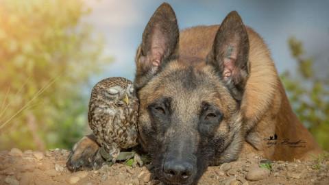 Un géant au coeur tendre adopte une minuscule chouette, son amour protecteur est tout à fait charmant.