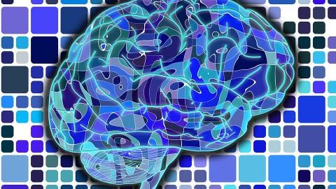 Voici 6 règles d'or pour que votre cerveau continue à produire de nouveaux neurones