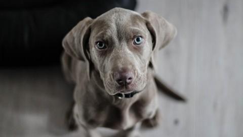La science affirme que votre chien comprend ce que vous dites