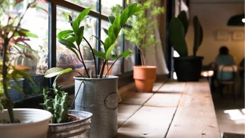 7 plantes qui purifient l'air et qui sont presque increvables