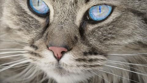 Bien dormir, stress, pression artérielle : avoir un chat à la maison est bon pour la santé