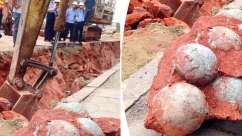 Des ouvriers du bâtiment ont découvert 43 œufs de dinosaures fossilisés sur un chantier d'Heyuan en Chine