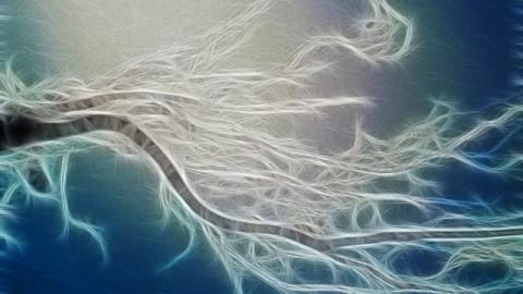 Selon une étude, les arbres ont des sentiments, tissent des liens et prennent soin les uns des autres