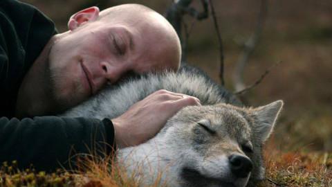 Cette réserve de loups vous permet de regarder les aurores boréales pendant que vous faites un câlin à un loup