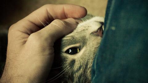 L'aspect scientifique du ronronnement: Comment le ronronnement du chat peut guérir les humains?