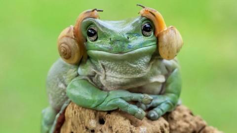17 photos qui prouvent que la nature fait ses propres Photoshop