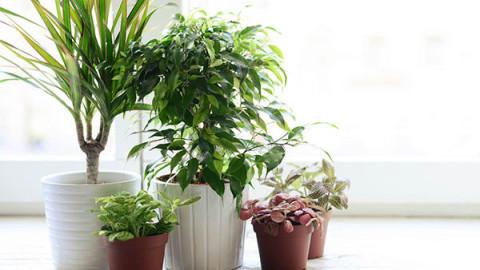 4 plantes abordables qui éliminent naturellement les produits chimiques de nos maisons