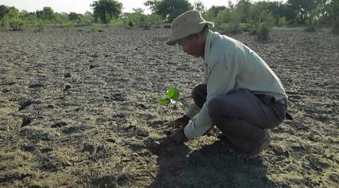 Il a planté un arbre quotidiennement au même endroit. 37 ans plus tard, il est stupéfait par ce qu'il a créé.