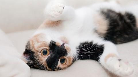 Les chats apprécient les humains bien plus qu'on ne le pense