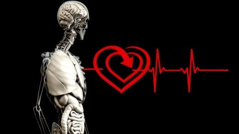 Une preuve de vie après la mort ? Une étude révèle que l'activité du cerveau continue après la mort