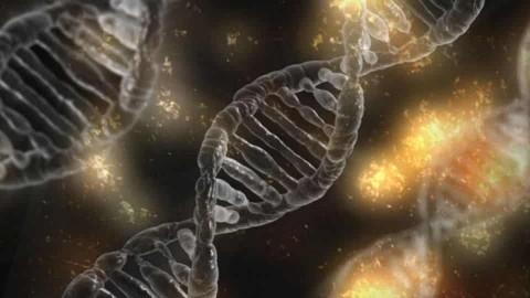 Les femmes pourraient porter l'ADN masculin de tous ceux avec qui elles ont eu des rapports intimes