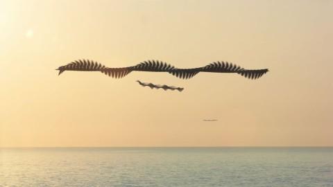 D'incroyables chronophotographies saisissent la trajectoire des oiseaux en vol
