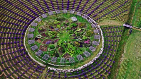Au Michigan, un labyrinthe de lavande possèderait des pouvoirs spirituels
