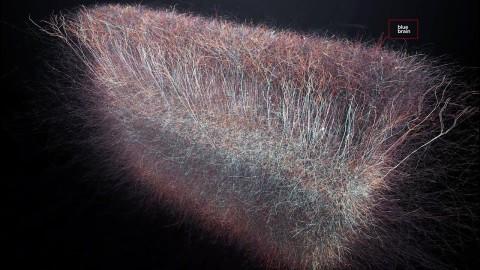 Des scientifiques ont fait la découverte d'un univers multidimensionnel dans notre cerveau