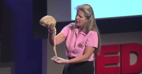 Une neurobiologiste formée à Harvard comprend le mystère de la vie suite à son AVC