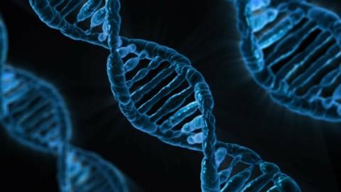 Au moins 500 de nos gènes seraient davantage actifs après notre décès